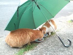 ネコも雨宿り