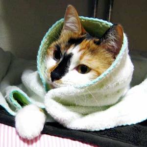 風邪ひき猫さん