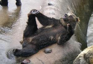 態度Lのクマ