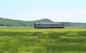 湿原を走るキハ54