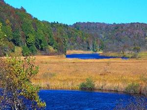 タンネ沼と音根沼