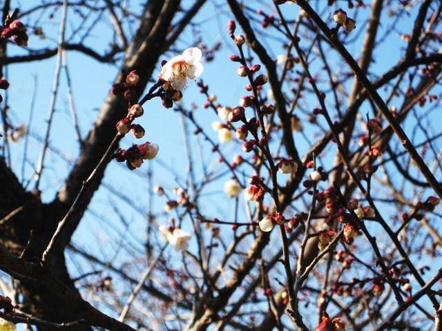 花とつぼみー2