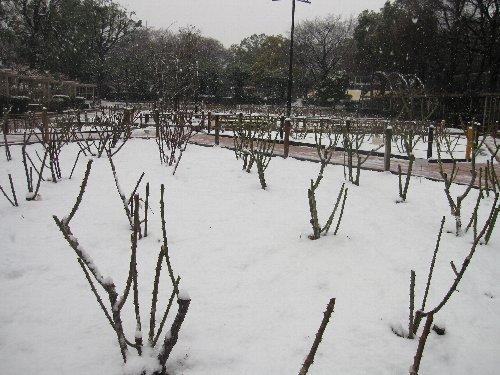 2014・02・14雪