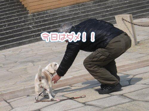 2014・03・15芦屋浜3