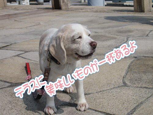 2014・03・15芦屋浜7