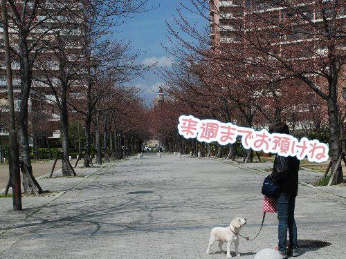 2014・03・29西宮ハーバー3