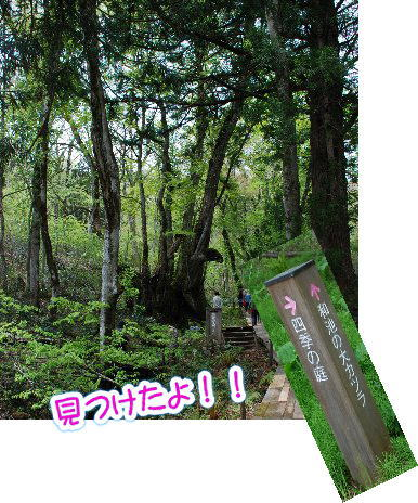 2014・05・04但馬植物園5