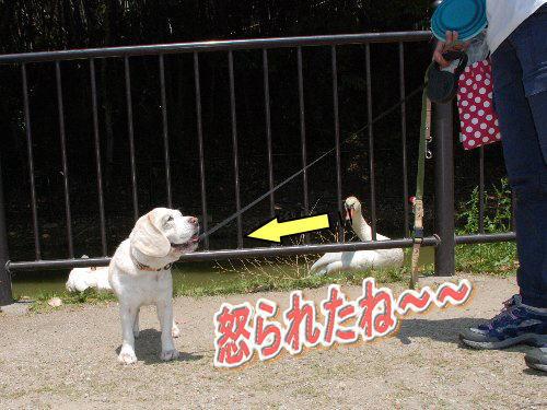 2014・05・11蜻蛉公園5