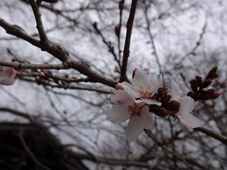 2014.3.18.mikamo 010