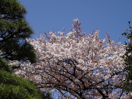 2014.4.07.tokyo 034