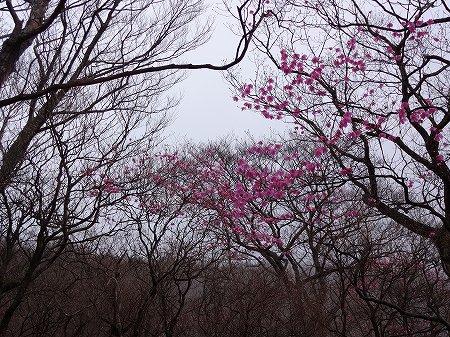 2014.5.6.akayashio 026