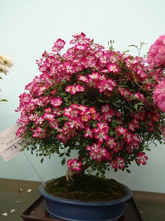 2014.5.15.rose 020
