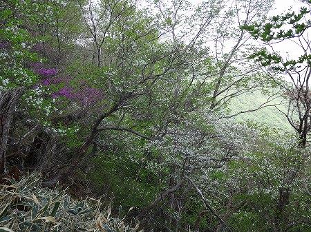 2014.5.30.nasu.takahara 119