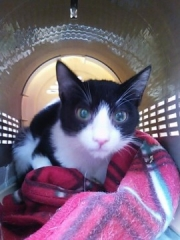 cat_33945_2.jpg