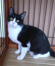 cat_34562_1.jpg