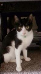 cat_34608_1.jpg