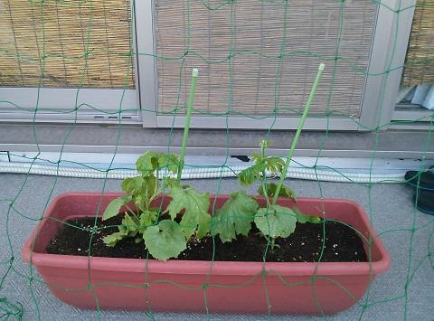 gardening103.jpg