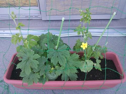 gardening117.jpg