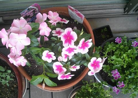 gardening123.jpg