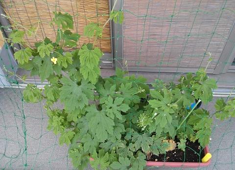 gardening125.jpg