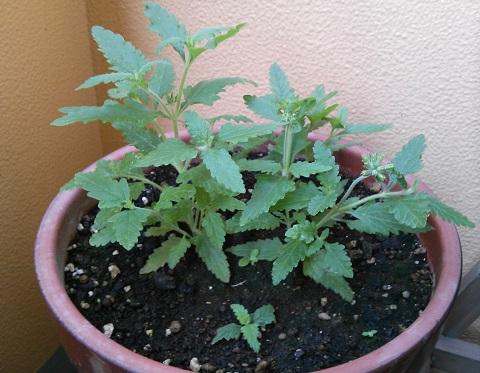 gardening130.jpg