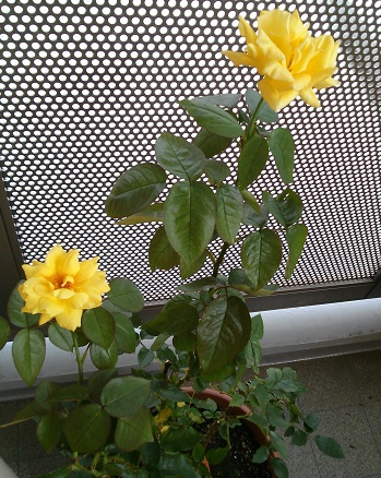 gardening142.jpg