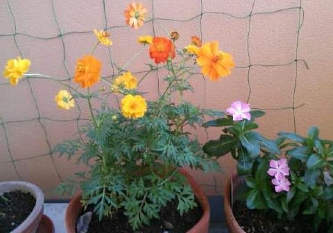 gardening162.jpg