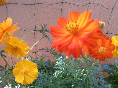 gardening163.jpg