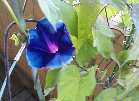 gardening49_20140805102528783.jpg