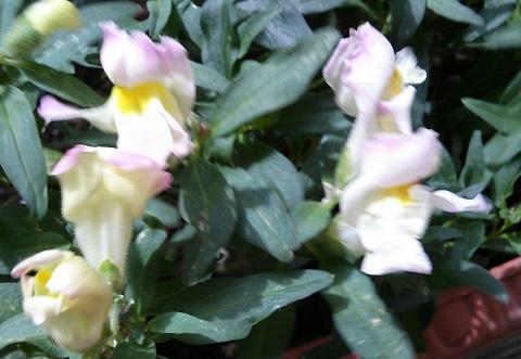 gardening50_201408051025297e2.jpg