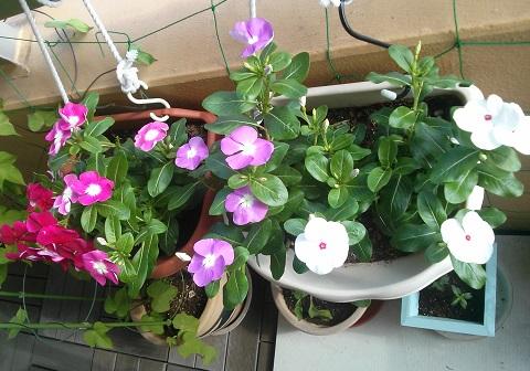 gardening51_20140805102531780.jpg