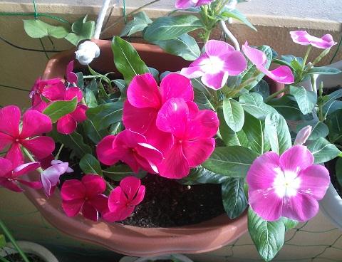 gardening52_201408051026131b1.jpg