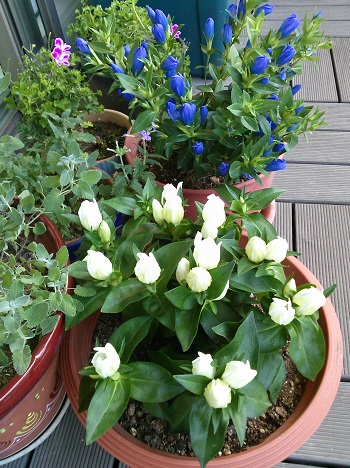 gardening54.jpg