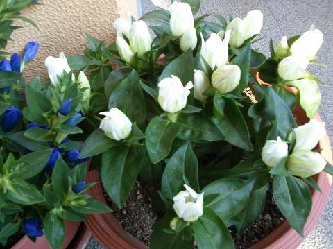 gardening55.jpg