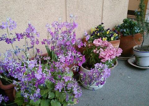 gardening60.jpg