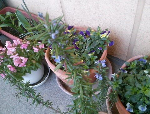 gardening61.jpg