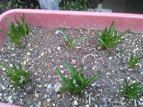 gardening64.jpg