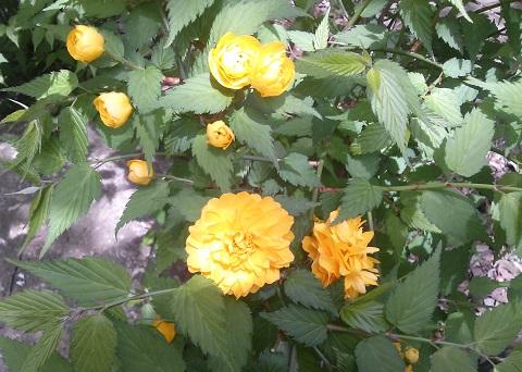 gardening68.jpg