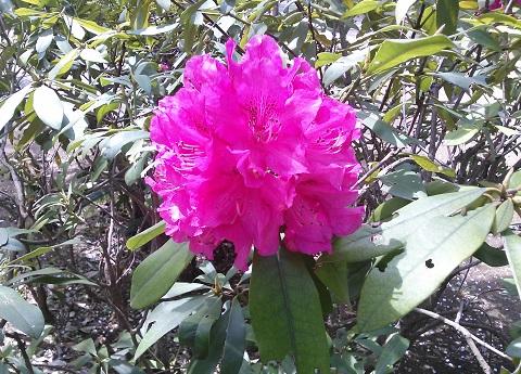 gardening70.jpg