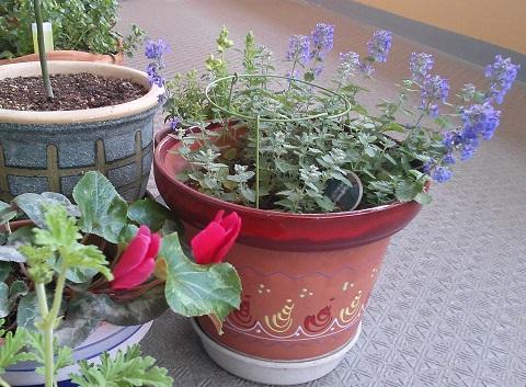 gardening78.jpg