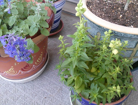 gardening79.jpg