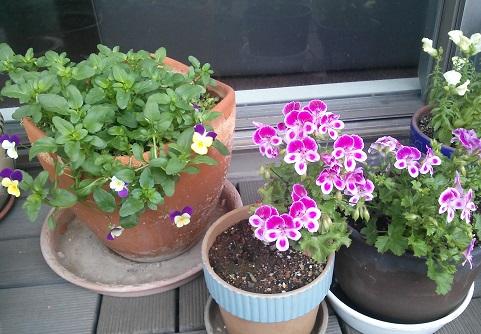 gardening91.jpg