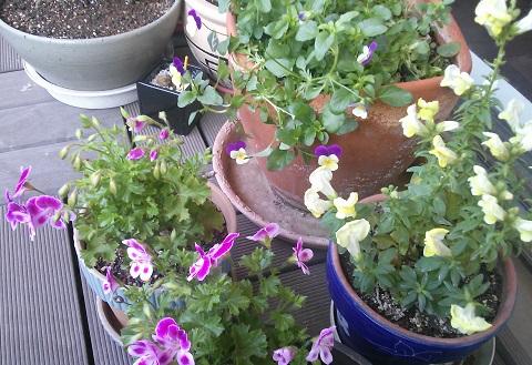 gardening93.jpg