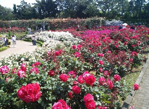 gardening94.jpg