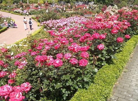 gardening95.jpg