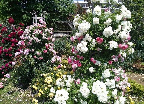 gardening96.jpg