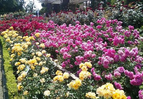 gardening97.jpg