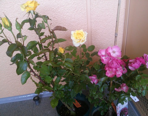 gardening98.jpg