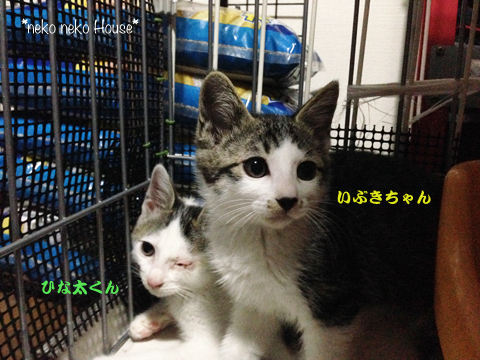 I2014-7-11MG_4875.jpg