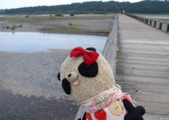 おばぶ大井川を眺める